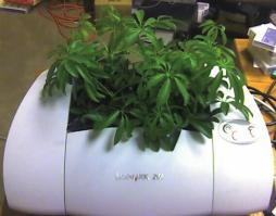 A green plant growing out of a printer